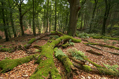 Follow the moss to the tree (Jessie van Weert) Tags: wideangle wonderful warm wide explore extreme extreem trees tree tak yellow dynamic mysterious dynamisch uitzicht outdoor outside sun sunshine interesting impressive incredible nikon d3100 nice photography plant plants adorable atmosphere sigma staatsbosbeheer summer depthoffield depth dof flickr fotografie fabulous field forest focus gorgeous green groothoek groen gelderland holland hill bijzonder landscape landschap light licht zon zomer view veld beautiful bomen netherlands nature ngc natuur natuurgebied natuurmonumenten magical moss mos