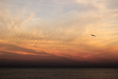 Vole, vole (Camille Raffourt) Tags: rose coucherdesoleil oiseau mer eau plage sky cloud sunset bird water sea beach pink blue bleu antibes cotedazur frenchriviera france alpesmaritime
