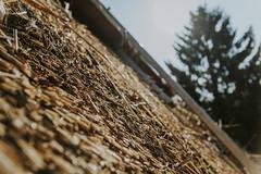 Till_Junker_20160914-_ILL4819 (scharfgestellt) Tags: reetdach reetdachdecker dachdecker handwerk stade reetdachdeckerjunker reetdachhaus junker stadehagen landkreis natur umwelt nature handmade