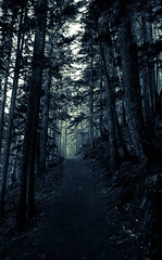 Into the Woods (Emily Kistler) Tags: d750 mountrainiernationalpark mountain np nationalpark nature nikon outdoors pacificnorthwest park rainier vacation washington woods forest trees plants usa unitedstates america path travel landscape