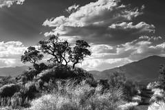 Blancos y negros en mi tierra de contrastes... (svg74) Tags: blancoynegro bw byn bn blackandwhite naturaleza nature nubes clouds rbol tree sky light landscape paisaje mlaga andalusia