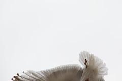 patte-et-plumes-7497 (Les Hobbys de Cawol) Tags: patte plumes mouette