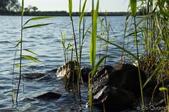 Lake (Els Quartel) Tags: water lake stones outdoor canoeing
