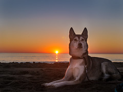 what a beautiful day! (d@neumi) Tags: backlighting gegenlicht flickr sunrise morning beach sea sun sonnenaufgang strand sand meer sonne himmel sky dog hund siberian husky panasonic lumix g7 animal tier mood spirit