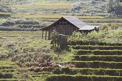 (vivianakoch) Tags: vietnam hoanglienson