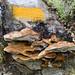 Setas Asturias: Parque de Redes