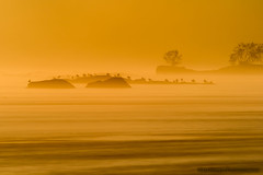 Sunrise through the Fog (ken.krach (kjkmep)) Tags: sunrise river maryland susquehanna susquehannastatepark mygearandme mygearandmepremium mygearandmebronze mygearandmesilver mygearandmegold bestevercompetitiongroup