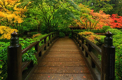 Zerenity (~ Aaron Reed ~) Tags: wood bridge autumn trees red green fall yellow photography japanesegarden wooden fallcolor photographyclass bridges photographers japanesemaple stockphotos stockimages professionalphotography blackwhitephotography landscapephotography photographyschool fineartphotographs skyphotographs lakephotographs aaronreed naturephotographs abstractphotographs landscapephotographs photographytraining japanesegardenportlandoregon framedartprints sunsetphotographs artphotographs sunrisephotographs aaronreedphotography oregonphotography surrealphotographs oregonphotographer redphotographs waterphotographs cityscapephotographs cloudsphotographs duskphotographs reflectionphotographs bluephotographs aaronreedphotographer landscapephotographygallery mountainsphotographs orangephotographs pavementphotographs whatislandscapephotography whatisstockphotography aaronreedart aaronreedprints aaronreednature aaronreedaluminumartprints yellowphotographs bridgephotographs buildingsphotographs twilightphotographs roadphotographs aaronreedmetalprints aaronreedacrylicfacemountprints