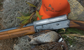 Private Alabama Quail Hunting - Davis Quail 25