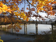 Gmund am Tegernsee Lake Side Shore Ufer Herbst Autumn Leaves (hn.) Tags: bridge autumn trees copyright lake tree fall leaves river germany season bayern deutschland bavaria see leaf heiconeumeyer europa europe waterfront laub herbst oberbayern upperbavaria eu lakeside autumnleaves foliage shore lakeshore watersedge ufer brcke fluss blatt bltter bume woodenbridge baum waterside tegernsee woodbridge pedestrianbridge herbstlaub gmund leaftree copyrighted pedestriansbridge seeufer sddeutschland autumnleaf holzbrcke mangfall laubbaum flus deciduoustree laubbume foliagetree gmundseeglas seeglas fusgngerbrcke gmundamtegernsee bankofalake