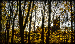 Through the trees. (CWhatPhotos) Tags: durham city autumn leaf leaves yellow color colour colours church silhouette silhouetted photograph with picture pictures photo photos image images foto fotos that have which contain olympus epl1 1442mm cwhatphotos 2012 flickr
