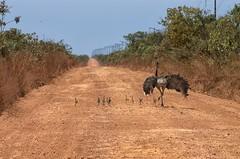 Serra do Penitente (deltafrut) Tags: road brasil ruta carretera route estrada maranho nordeste rodovia agricultura suldomaranho cerradosmaranhenses serradopenitente agronegciomaranhense chapadasdomaranho algododonordeste