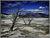 "Mammoth Hot Springs Tree Yellowstone N.P. (James A. Crawford - ♪♫♪""Crawf""♪♫♪) Tags: life trees 2 wallpaper sky usa color art texture nature photoshop landscape eos nationalpark montana rocks moments magic ngc creative idaho textures your national mammoth level yellowstonenationalpark pro yellowstone wyoming nationalparks canoneos unforgettable hotsprings digitalphotography edges geysers mammothhotsprings in blueribbonwinner dfine creativephotography phototools justimagine cs5 efex colorefexpro niksoftware creativedigitalphotography viveza theunforgettablepictures creativepostprocessing dfine20 gününeniyisithebestofday ononephototools viveza2 extraordinarilyimpressive imageborders magicmomentsinyourlifelevel1magicmomentsinyourlifelevel2magicmomentsinyourlifelevel3 magicmomentsinyourlifelevel2 magicmomentsinyourlifelevel1 magicmomentsinyourlifelevel3 magicmomentsinyourlifelevel4"