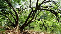 Nature @ Anchuthengu - Thiruvananthapuram (azimrasheedkhan) Tags: sea india lake tree rock stone river war fort pillar kerala varkala rebellion british trivandrum portugese thiruvananthapuram seafort attingal woodenpillar anchuthengu anchengo ancuthengufort anchengofort attingalrebellion natureatanchuthengu