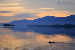 Ducks at Sunrise (Rick Sause Photography) Tags: blue sunset sky orange lake seascape reflection animals sunrise islands ripple ducks lakegeorge ripples