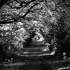 Along the Autumn Road: Earlsdon Coventry West Midlands UK (Kangaroobie... .home) Tags: uk autumn bw void coventry westmidlands earlsdon