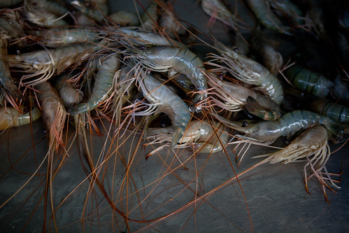 Shrimp at the wholesale fish market near Khulna, Bangladesh. Photo by Mike Lusmore/Duckrabbit, 2012.