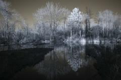 IMG_1234 (Dan Correia) Tags: amherst reflection swamp infrared canonef1740mmf4lusm 15fav topv111 510fav topv333 topv555 1025fav