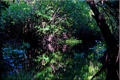 Guatemala - Monterrico (Galeon Fotografia) Tags: naturaleza nature guatemala natur mangrove mangue  monterrico manglares    galeonfotografa