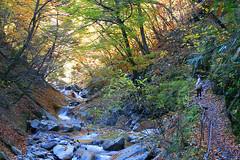 IMG_9785 (youkaine) Tags: november autumn red orange mountain yellow japan forest river waterfall hiking autumncolors foliage 日本 紅葉 秋 山 yamanashi 11月 川 ハイキング 山梨 nishizawakeikoku 葉っぱ 山梨県