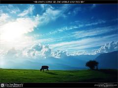 When I Woke Up, The World Was New (Viga Versa Photography) Tags: world blue light sky sunlight india mountains green nature beautiful grass sunshine silhouette clouds feast landscape cow soft skies puff serene rays bliss kullu himachalpradesh bijlimahadev canon550d