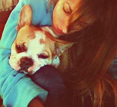 AXELYYO (krisparatrop) Tags: dogs animals frenchie frenchbulldog perros axel bulldogfrancs krisparatrop