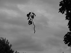 Natures Illusion in B & W I (NickyG8) Tags: trees abstract nature leafs yahoo:yourpictures=yourbestphotoof2012