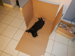 Zerlegt! (Ottmar H.) Tags: cat chat gato katze macska  kater  tomcat