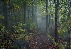 passage (cb cline) Tags: montagne automne montral vert arbres montroyal sentier fort brume escarpement feuillemorte
