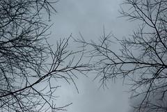 Entwined  345-366 #3 (Samyra Serin) Tags: paris france tree silhouette 50mm europe pentax gimp potd workplace 2012 year3 75019 aphotoaday day345 project365 avenuedeflandre qtpfsgui samyras pentaxasmc50mmf17 k200d mantiuk06 shuttercal reinhard05 day1075 luminancehdr mantiuk08 samyraserin samyra008 noscreenchallenge