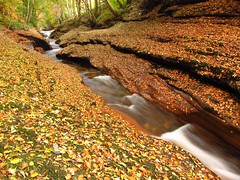 An autumn walk (ambo333) Tags: uk autumn england water leaves leaf h2o cumbria brampton gelt geltwood geltsdale geltwoods rivergelt therivergelt