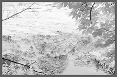 Ripples and reflections (Elisafox22 Internet On/Off at the moment) Tags: elisafox22 nikon d90 infrared 720nm water loch fyviecastleloch ripples leaves reflections outdoors shadows bw mono blackandwhite greyscale landscape fyvie aberdeenshire scotland monotone elisaliddell2016