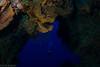 No Name Reef, Cozumel (jcl8888) Tags: scuba underwater tokina 1017mm nikon nauticam reef coral diver cavern liveaboard aggressor cozumel mexico