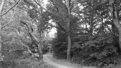 Holes Bay, Poole (trevormulder666) Tags: reflections nature poole brownseaisland sky woods trees tree dwt dorsetwildlifetrust pooleharbour sepia negative greyscale nationaltraustsea water sunup ferry
