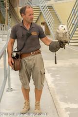 DSC_2335 (Pascal Gianoli) Tags: beauval bird chouette oiseau owl zoo zooparc saintaignansurcher centrevaldeloire france fr pascal gianoli pascalgianoli