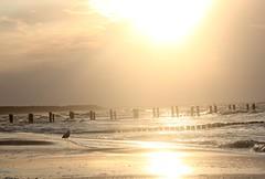 Ostsee (selanger) Tags: zingst ostsee balticsea sundown sonnenuntergang sun mwe ocean meer buhnen picmonkey