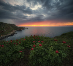 Sunrise and wild peonies (Krasi St Matarov) Tags: peonies water wild outdoor bulgaria blacksea clouds sea sunrise landscape reflection rocks workshop seascape travel yailata nikon phototour spring flower ngc gold nature wow