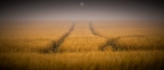 Into Nothing (Augmented Reality Images (Getty Contributor)) Tags: barley canon countryside crop farm field landscape light mist morayshire nature scotland shadow summer tracks