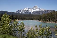 IMG_4697.jpg (profstoff) Tags: icefieldsparkway athabascariver canada 2016 rockies