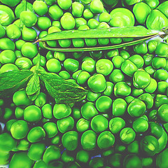 Sweet peas with a sprig of mint (Lemon~art) Tags: pea peapod peas pod mint garden vegetable food flora manipulation green flat graphic photo monotone