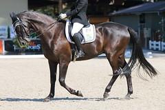 IMG_7445 (dreiwn) Tags: dressage dressur dressuur pferd reitturnier turnierreiten pferdesport horse horseback horseriding equestrian reitverein dressurprfung kandare doublebridle reiten pferde reitplatz ridingarena