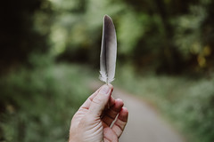 feather (thedecentexposure) Tags: bokeh feather tribe depthoffield leaf fuji green read lxc dof feder