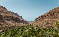 Canyon (AlistairBeavis) Tags: alistairbeavis alistairbeaviscom canaryislands grancanaria hyperfocal f16 landscape rugged valley hills palmtrees