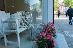 DSC_8309 (Adrian Royle) Tags: lithuania vilnius travel holiday street random architecture sheep window shop reflection