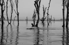Nakuru Lake (jhderojas) Tags: lake nakuru kenia blackandwhite