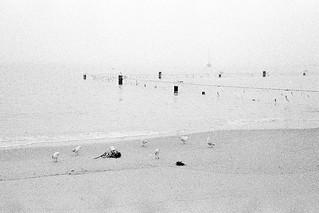 foggy morning  #013