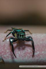 20121026-125 (ajakblackgoat) Tags: macro insect nikonmicro105mmf28 nikond700