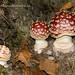 Fotos setas Asturias