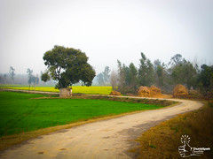Nature's Colour (ThumbSpark Creative - Debabrata's Portfolio) Tags: road india colour green field landscape countryside photo scenery village indian photograph mustard agriculture haryana thumbsparkcreative debabratadey
