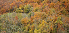 Autumn textures (II) (elosoenpersona) Tags: autumn trees españa del forest spain colours arboles asturias colores bosque otoño hermo fuentes monasterio cordillera cangas narcea cantabrica elosoenpersona